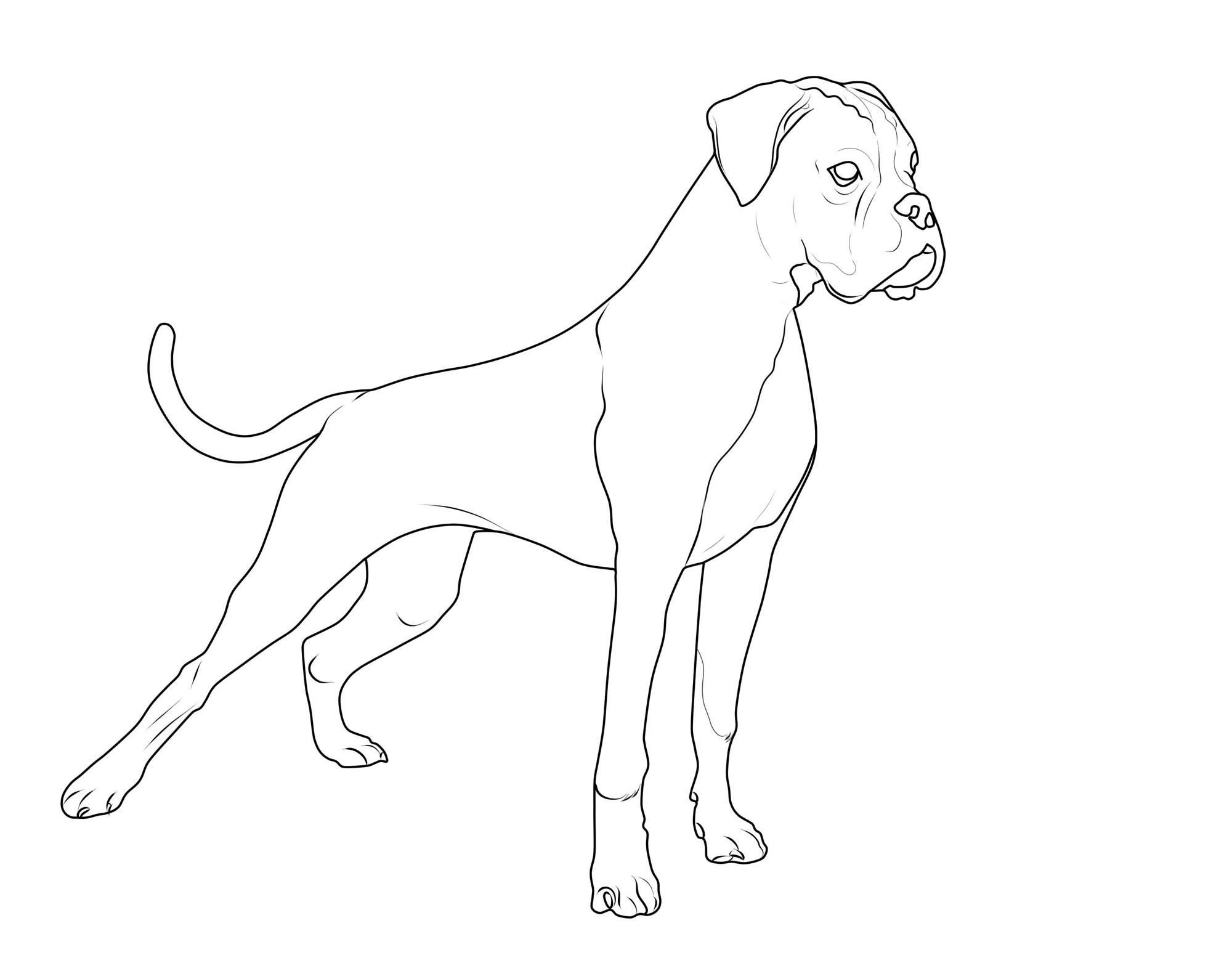 Kostenlose Malvorlage Hunde: Deutscher Boxer zum Ausmalen