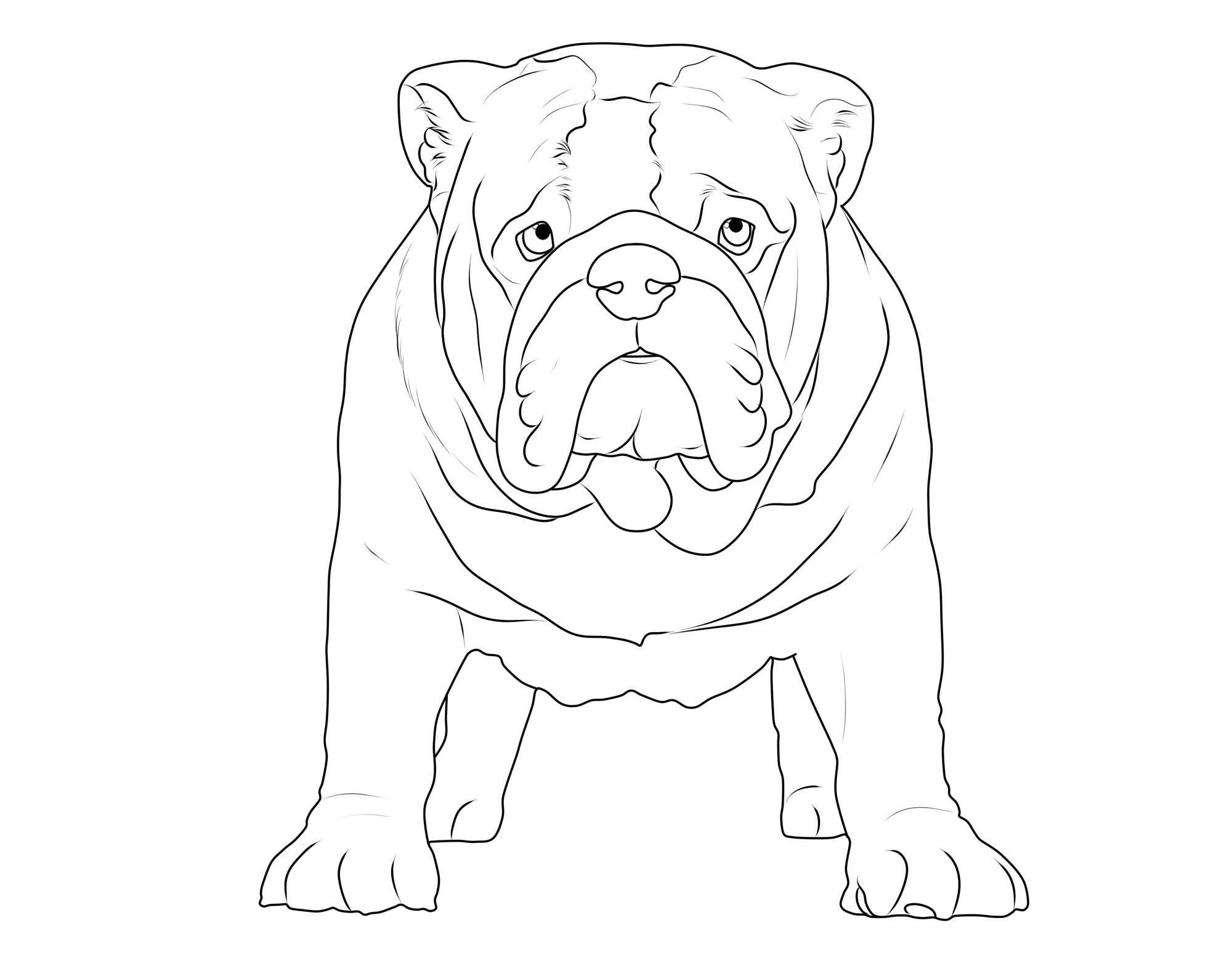 ausmalbilder hunde franz sische bulldogge batavusprorace. Black Bedroom Furniture Sets. Home Design Ideas