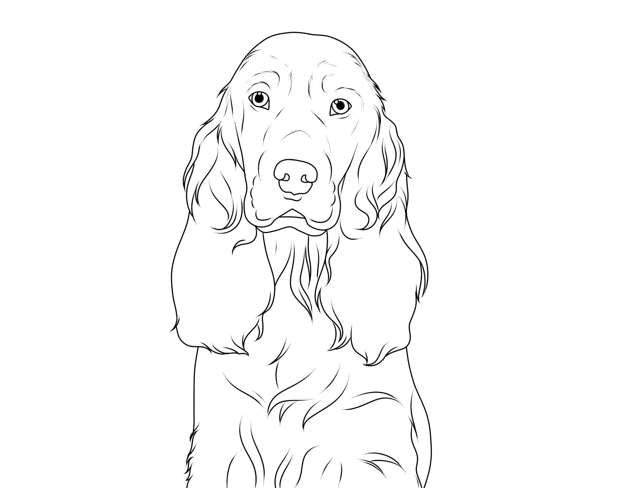 Ausmalbild Hunde: Englischer Cocker Spaniel kostenlos ausdrucken