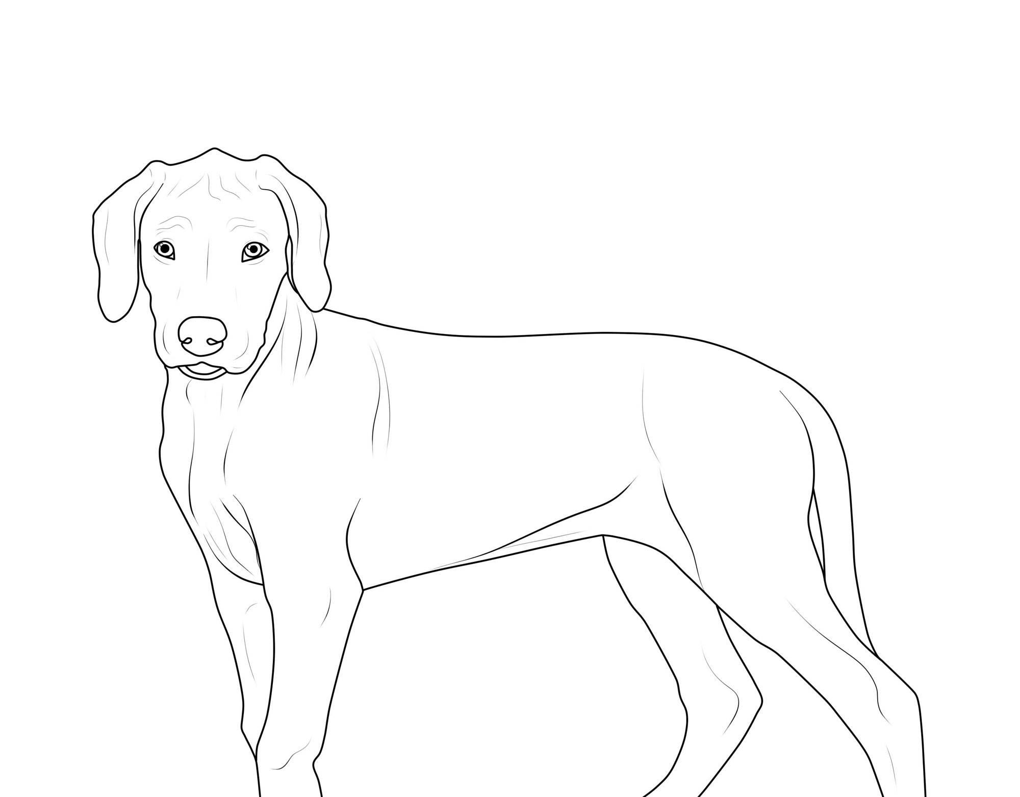 Ausmalbild Hunde Rhodesian Ridgeback Kostenlos Ausdrucken