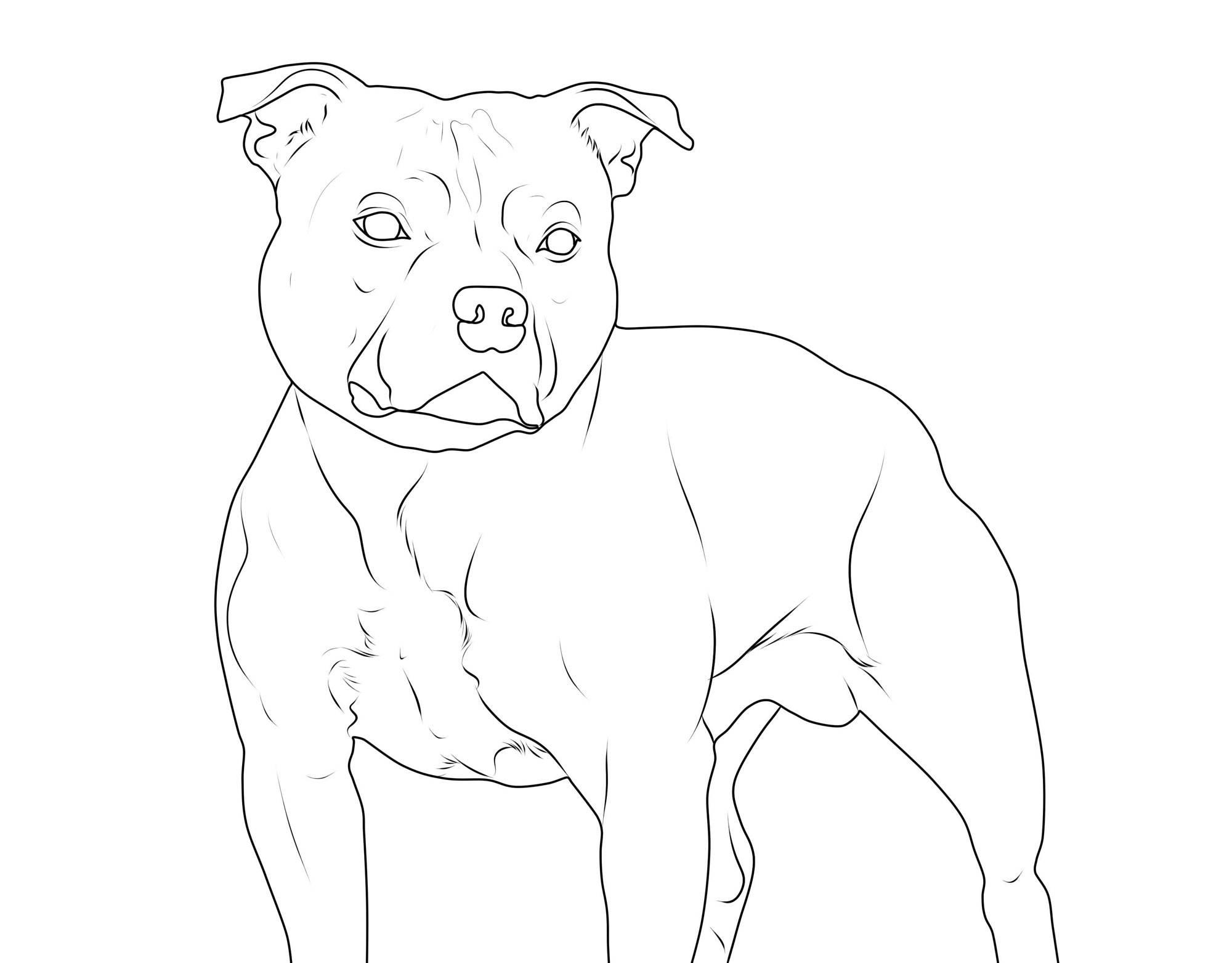 kostenlose malvorlage hunde: staffordshire bullterrier zum