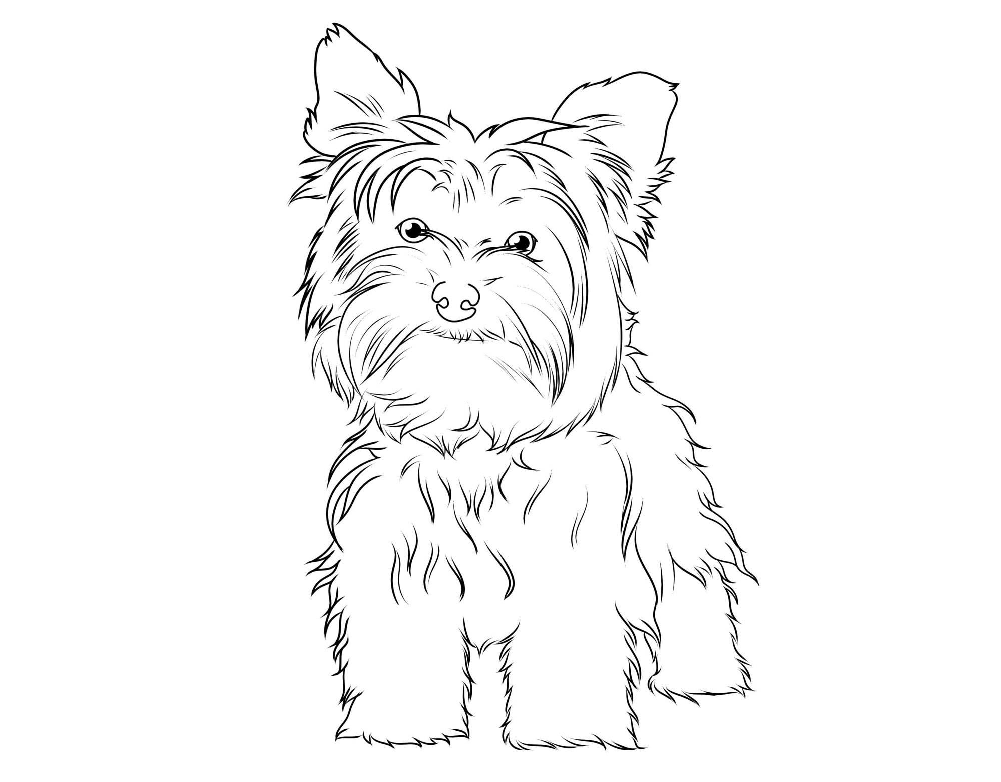 Ausmalbild Hunde: Yorkshire Terrier kostenlos ausdrucken