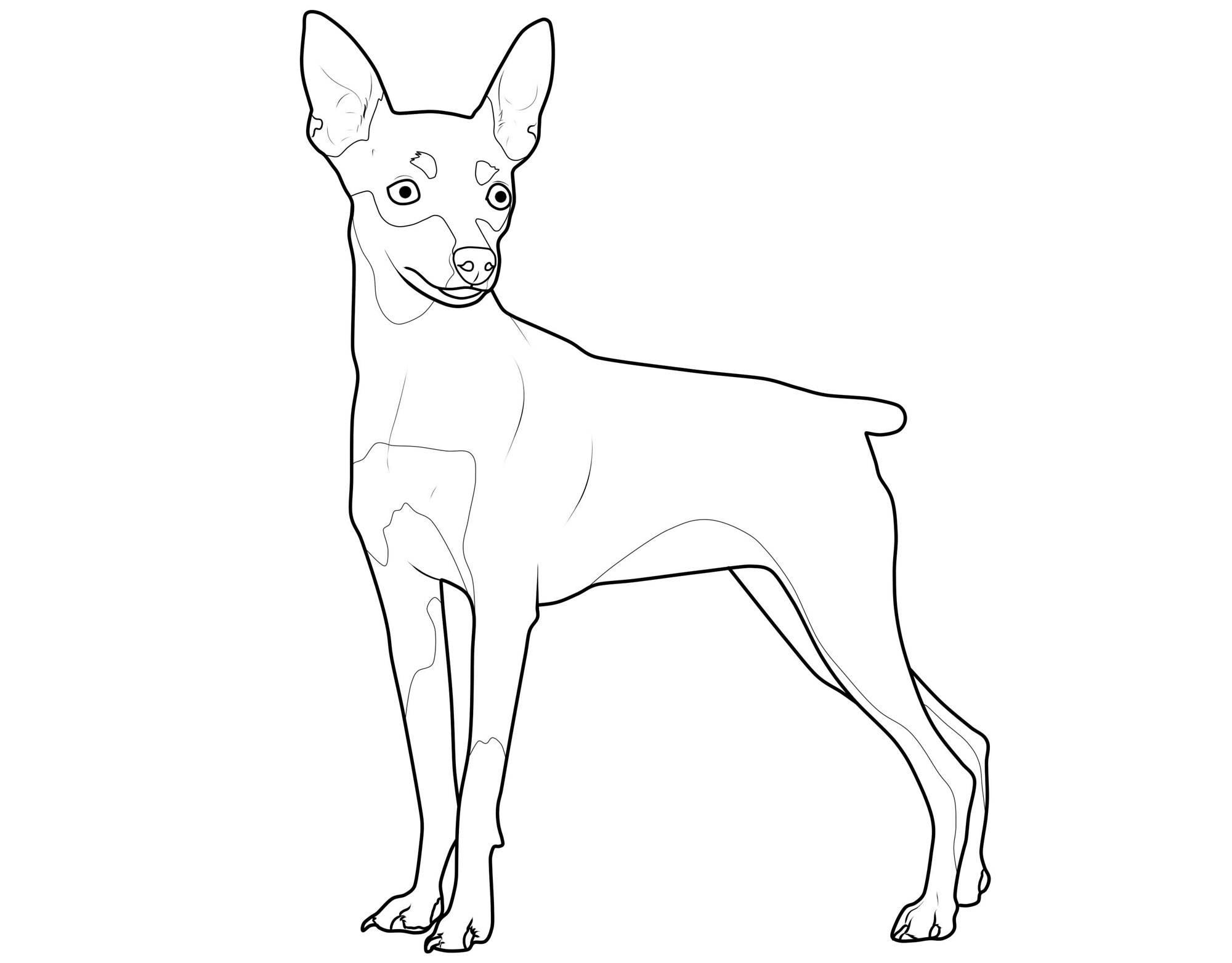 kostenlose malvorlage hunde: zwergpinscher zum ausmalen