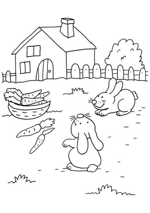 Kostenlose Malvorlage Kaninchen Kaninchen Und Möhren Zum Ausmalen
