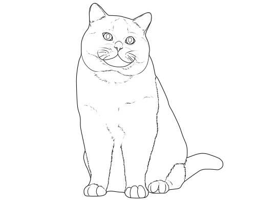 Kostenlose Malvorlage Katzen Katzenrassen Britisch Kurzhaar Zum