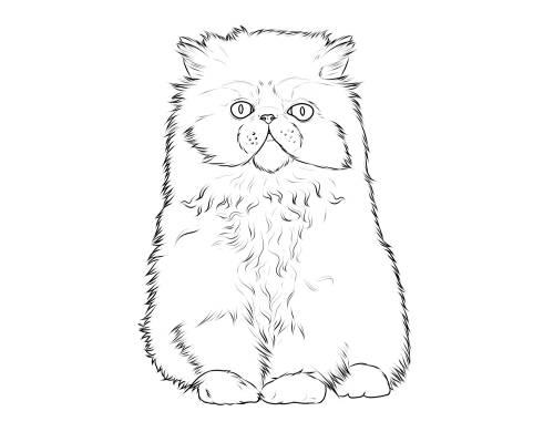 Malvorlagen Für Kinder: Kostenlose Malvorlage Katzen: Katzenrassen: Perserkatze