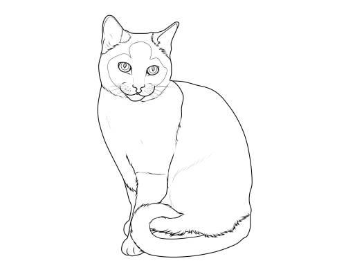 kostenlose malvorlage katzen katzenrassen siamkatze zum