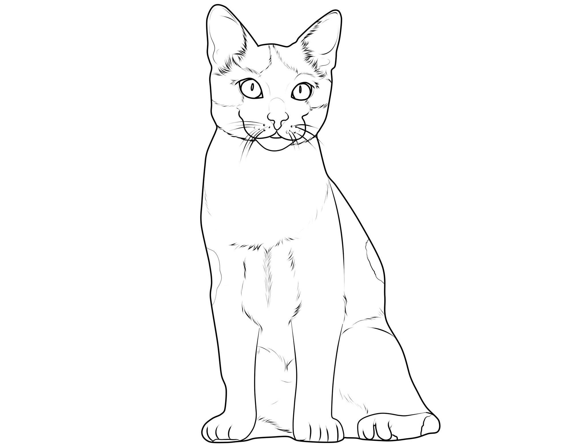 Ausmalbild Katzen: Katzenrassen: Europäisch Kurzhaar kostenlos ...