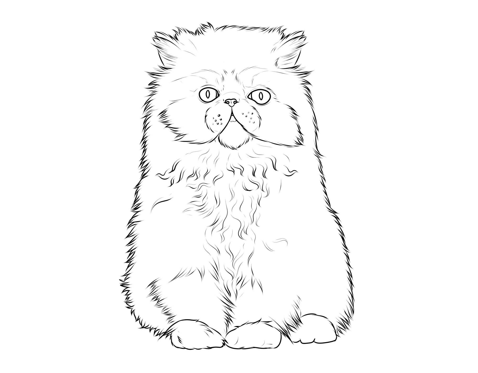 Ausmalbild Katzen: Katzenrassen: Perserkatze kostenlos ausdrucken