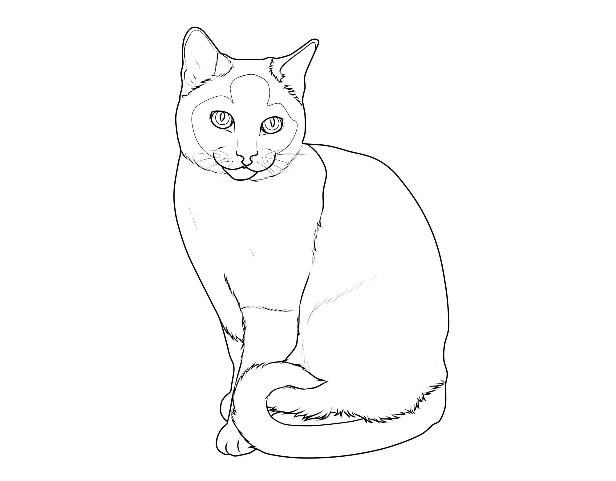 Ausmalbild Katzen: Katzenrassen: Siamkatze kostenlos ausdrucken