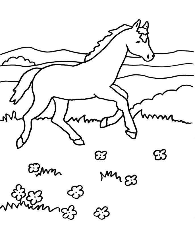 kostenlose malvorlage pferde: pferd galoppiert zum ausmalen