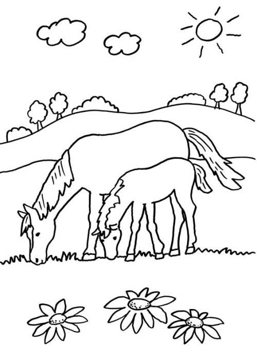 Kostenlose Malvorlage Pferde: Stute und ihr Fohlen ausmalen zum Ausmalen
