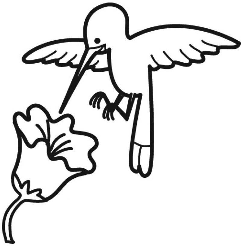 malvorlage lustige vögel  ausmalbilder