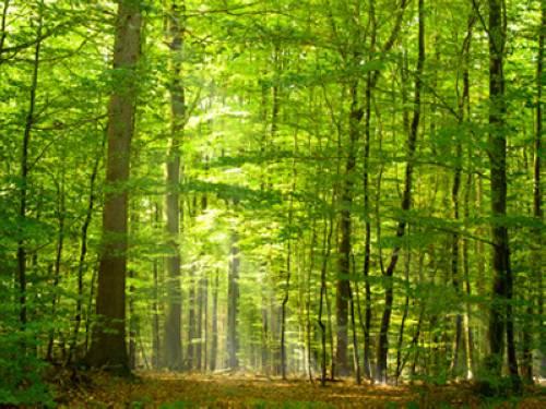 warum spenden uns bäume luft