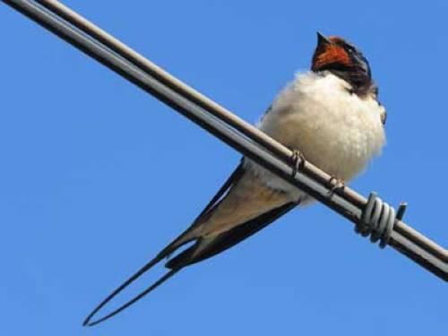 warum können vögel auf einer stromleitung sitzen