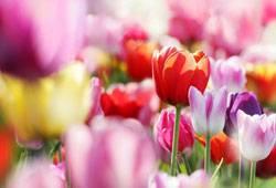 Gedichte Rund Um Blumen