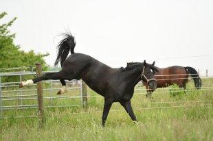 kostenlose malvorlage cowboys  indianer: cowboy auf seinem pferd zum ausmalen