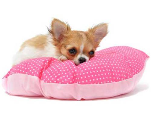 wissen ber haustiere sollte man ein dreckiges hunde kissen waschen. Black Bedroom Furniture Sets. Home Design Ideas