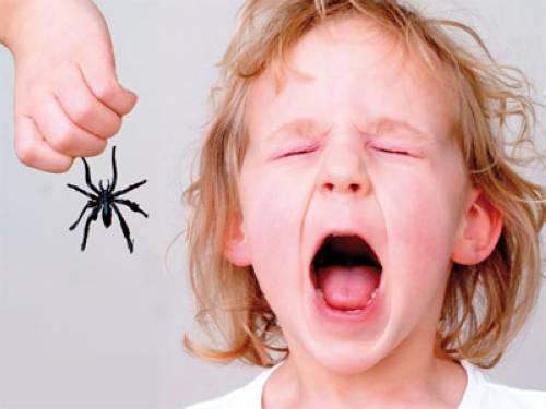 tipps gegen spinnen spinnen bek mpfen die besten tipps gegen spinnen im haus spinnen bek mpfen. Black Bedroom Furniture Sets. Home Design Ideas