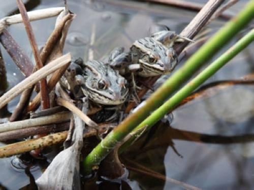 Wissen über Haustiere - Amphibien, Reptilien und Schnecken: Halten ...
