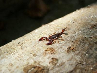 Warum sind Skorpione gefährlich?