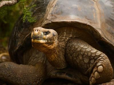 Warum Werden Schildkröten So Alt