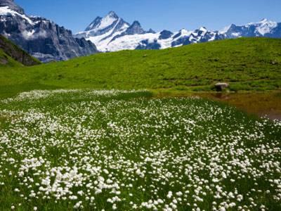 warum ist es auf den bergen kälter als im tal, obwohl die sonne näher an den bergen ist?