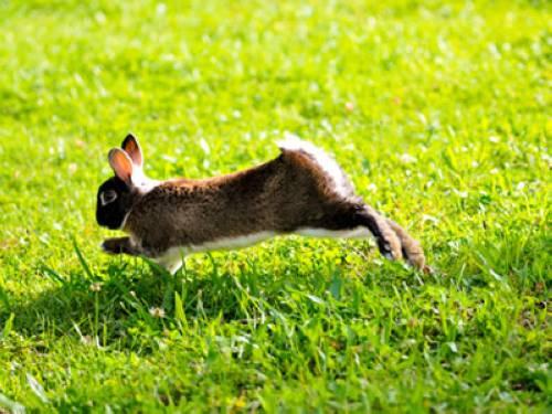wissen ber haustiere gen gend auslauf f r kaninchen. Black Bedroom Furniture Sets. Home Design Ideas