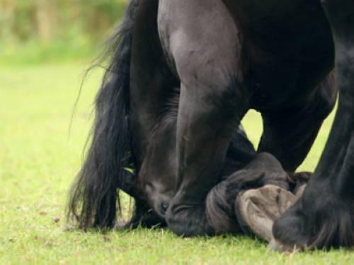 wissen ueber haustiere tun sich pferde bei stuerzen