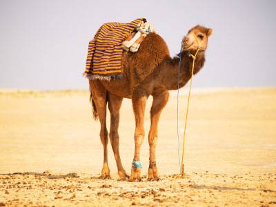 redewendung woher kommt eher geht ein kamel durchs nadel hr. Black Bedroom Furniture Sets. Home Design Ideas