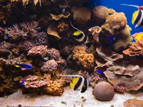 wissen ber haustiere was ist ein biotop aquarium. Black Bedroom Furniture Sets. Home Design Ideas