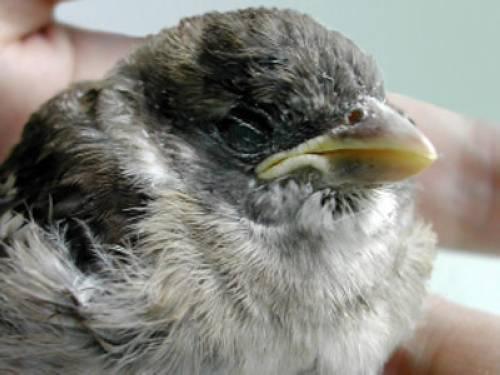 wissen über haustiere kranker vogel gefunden  was tun