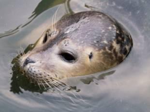 kostenlose malvorlage sommer: delfin zum ausmalen