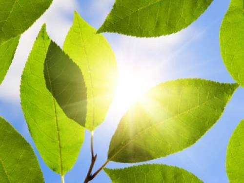 Pflanzen  Wieso wachsen Pflanzen ohne Licht nicht?