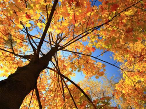 Wieso Verfarben Sich Im Herbst Die Blatter Und Fallen Von Den Baumen