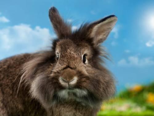warum haben hasen und kaninchen so lange ohren. Black Bedroom Furniture Sets. Home Design Ideas