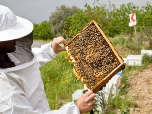 Warum Heißt Bienenstich