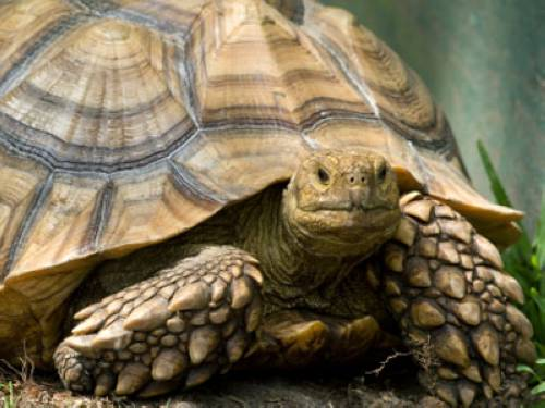 warum haben schildkröten einen panzer