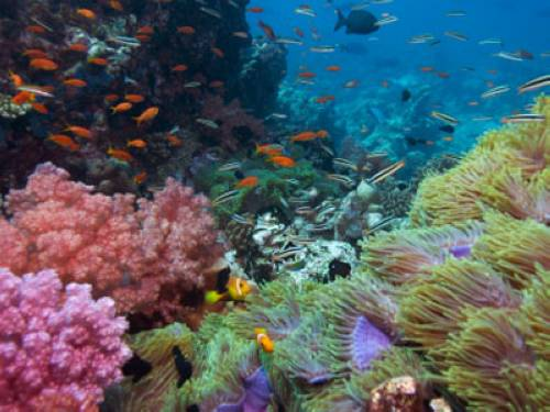 Warum Sind Korallen Keine Pflanzen