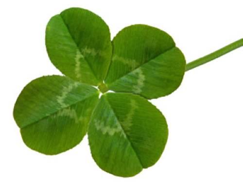 Kleeblatt Vier Blätter