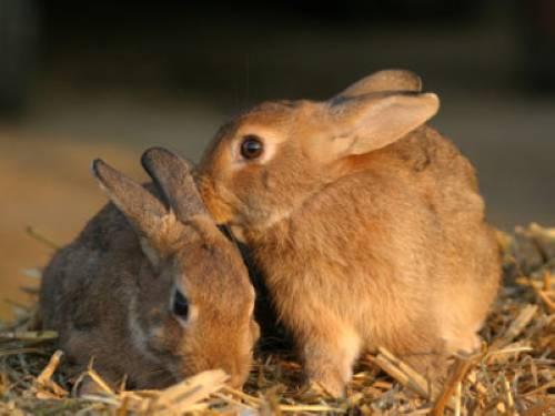 warum leben kaninchen sicherer als hasen. Black Bedroom Furniture Sets. Home Design Ideas
