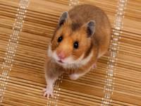 Wissen über Haustiere: Können Kröten im Gartenteich leben?