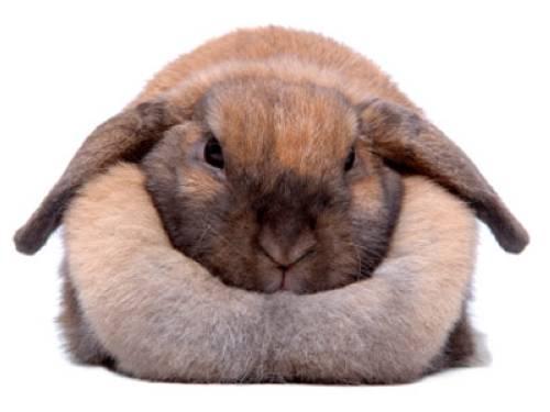 wissen ber haustiere mein kaninchen ist zu dick. Black Bedroom Furniture Sets. Home Design Ideas