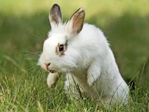 wissen ber haustiere meine kaninchen weibchen zanken sich. Black Bedroom Furniture Sets. Home Design Ideas