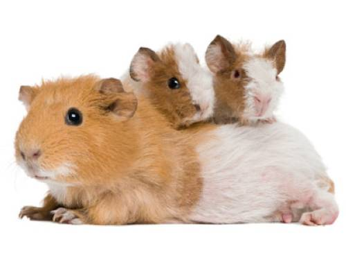 Wissen über Haustiere: Meine Maus bleibt nicht ruhig auf meiner Hand ...