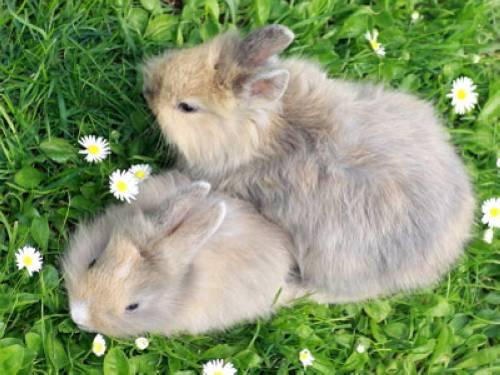 Wissen über Haustiere - Die beliebtesten Haustiere: Meine Kaninchen